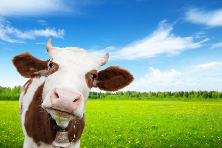Какие продукты опередили молоко по содержанию кальция?