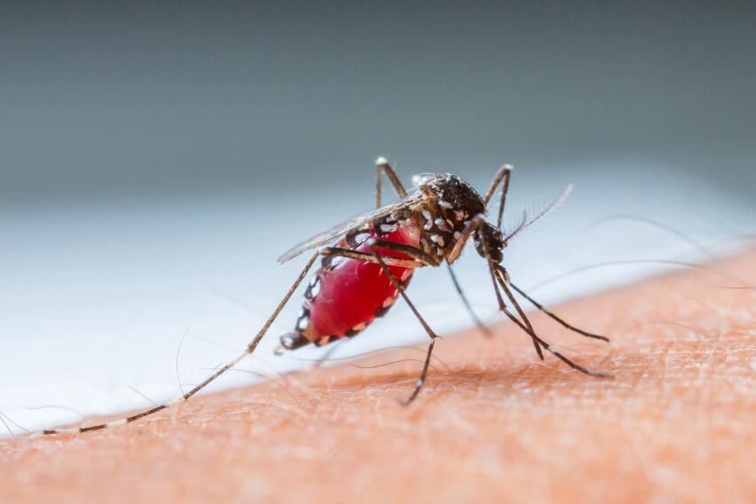 Ученые рассказали, какая группа крови больше всего привлекает комаров
