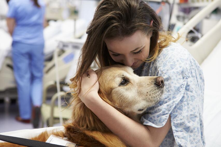 Собаки способны определить коронавирус по запаху пота