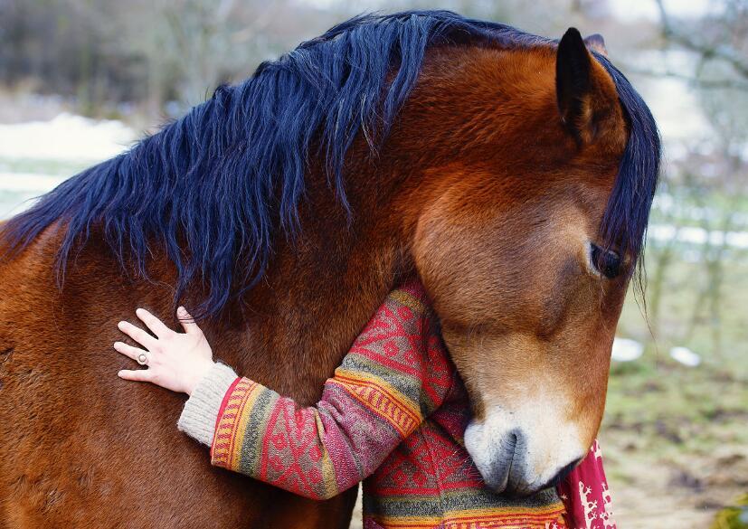 Какие проблемы со здоровьем можно устранить благодаря катанию на лошади?