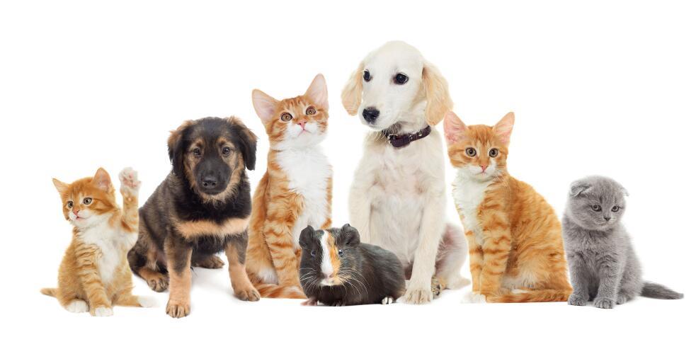 Как домашние животные влияют на наше здоровье?
